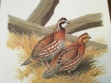 Don Eckelberry ( Bobwhite ) Autographed lithograph print series 2