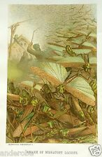 Rare 1885 Prang Chromo Swarm of Locusts Nice Print/Great Color/Unique L@K!