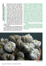 How to Grow Lithops and Other Living Stone Plants Conophytum succulents cacti +|