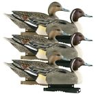 GHG Life Size Pintail Duck Decoys 6 Pack