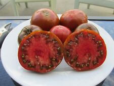 Syagrus Romanzoffiana 50 QUEEN PALM SEEDS fresh off tree harvested11//25//18