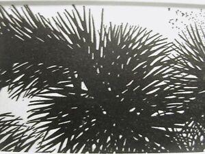 Don Blanding 1948 DESERT PLANT Art Deco Print Matted
