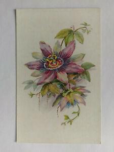 Bermuda Vintage colour Postcard c1960s The Passion Flower & Legend