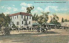 Cawston Ostrich Farm, South Pasadena, Calif. Vintage Postcards