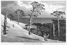 Kurische Nehrung, Schwarzort, Wald und Düne, Original-Holzstich von ca. 1870