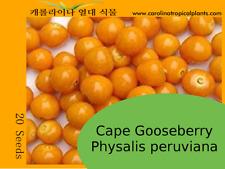 CAPE GOOSEBERRY SEEDS – 20 Seeds