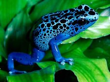 Blue Frog 8x10 Picture Celebrity Print