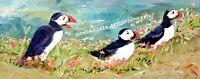 PUFFIN SEA BIRD ORIGINAL OIL PAINTING BLOCK CANVAS B SANDRA COEN ARTIST