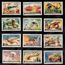 Dangerous Animals Kohler Swiss 1920 Stamp Card Set Venomous Snake Spider Fish