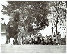 1959 Original Photo elephant & children of 5th US Army at Riverview Park Chicago