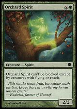 FOIL Spirito del Frutteto - Orchard Spirit MTG MAGIC Innistrad Ita