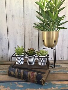 New Set Of 3 Artificial Succulent Plants in Decorative Ceramic Pots Metal Frame