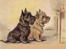 CAIRN & SCOTTISH TERRIER WATCH GOLDFISH BOWL CHARMING DOG GREETINGS NOTE CARD