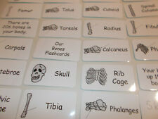Human Skeleton Flash Cards. Preschool Picture and Word Flash Cards. Anatomy fo