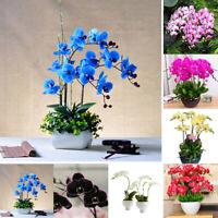 100Pcs Orchid Seeds Flower Plant Office Home Ornament Garden Bonsai Decor Charm