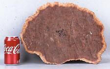 High Figured Red Mallee Burl Cap  3 1/4 x 10 1/2 x 14 1/2   RML1839