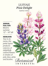 Pixie Delight Lupine Seeds - 1.5 grams