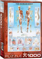 Human Body 1000 piece jigsaw puzzle 680mm x 490mm (pz)