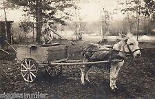 Hund als Kutscher mit Esel AK 1918 Humor Honden Chiens Dogs Tiere 1601018