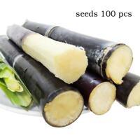 100pcs Succulent Sugar Cane Seeds Delicious Vegetable Fruit Seeds sugarcane Seed
