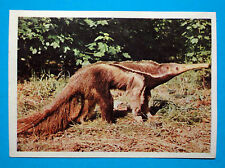 Figurina Panini-ANIMALI DI TUTTO IL MONDO 1965-n.170-FORMICHIERE-rec