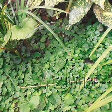 Pheasant Phasianus Quail Woodcock Chukar Turkey Grouse Snare Steel wire Trap