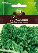 Choux Kale, halbhoher Vert frisés, Brassica Oleracea, légumes, Chrestensen, pg1