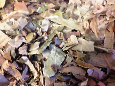 Pi Pa Ye Loquat Leaf Folium Eriobotryae 100g/3.5oz dry herbs Free shipping