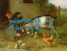 1935 E.Hunt~Goat Butts Chicken Coop~Rooster~Hens~Chicks~NEW Large Note Cards