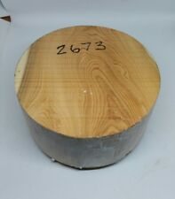 Yew woodturning bowl blank (2673) (205mm x 102mm)