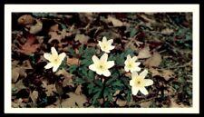 Grandee Britain's Wild Flowers 1986 - Wood Anemone Anemone nemorosa No. 2