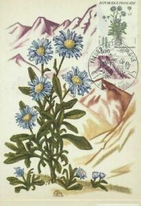 Card Postal CEF 1er Day France Flowers Of Mountains Aster 1984