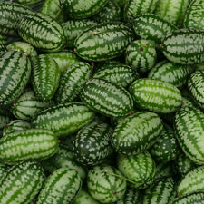 Vegetable - Cucamelon - 20 Seeds