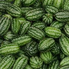 Vegetable - Cucamelon - 20 Seeds