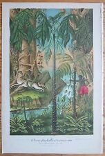 Lemaire Illustration Horticole Palm Amorphophallus Brasil 2 Prints - 1865