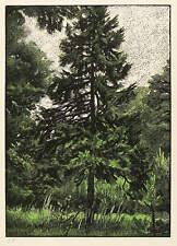FRANZ HEIN - UNSERE BÄUME - FICHTE - Farbholzschnitt 1925
