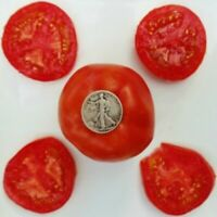 Earliana - Very early - 40 seeds per packet - Buy any 3 varieties, get 1 free!