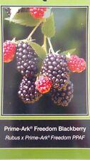 Prime-Ark Freedom Thornless Blackberry Plant Home Garden Plants Blackberries
