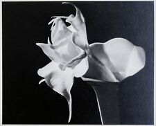 Imogen Cunningham: Datura, 1940s. Signed, Numbered, Gelatin Silver Photograph