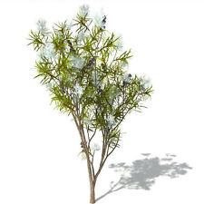 TEA TREE 10 ml, HUILE ESSENTIELLE  GARANTIE HECT ECO-CERTIFIABLE la vie en zen