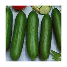 10 Mini - Snackgurken Samen   reichtragend  Garten-Balkon Gurken Gurke  Salat