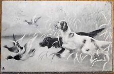 Hunting Dogs & Ducks 1903 Raphael Tuck Art Postcard #921