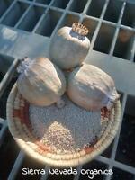 Poppy Peshawar Somniferum 1000+ Flower Seeds , Heirloom Organic Viable