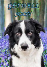 Border Collie  GET WELL SOON A5 Personalised Greeting Card  PIDBOR1