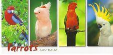 XXL-Ansichtskarte: Australien: Loris und Kakadus