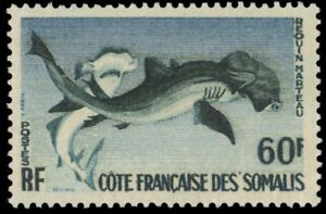 "SOMALI COAST 282 (Mi330) - Hammerhead Shark ""Sphyrna zygaena"" (pa64093)"