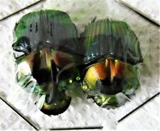 Rainbow Dung Scarab Beetle Phanaeus imperator imperator Pair FAST FROM USA