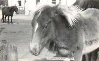 Vintage Real Photo Postcard, A Dartmoor Pony 16W