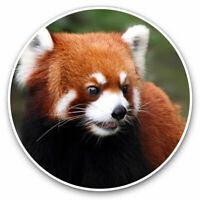 2 x Vinyl Stickers 7.5cm - Endangered Red Panda Cool Gift #14159