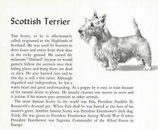 Scottish Terrier - 1954 Vintage Dog Art Print - Matted